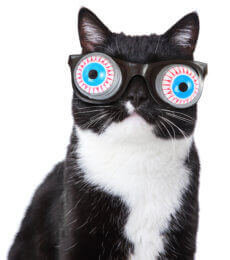 Black and white cat wearing silly glasses